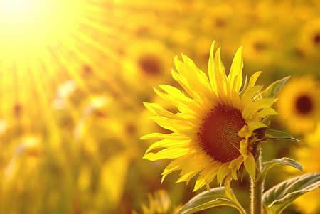 【我的文学梦】散文:文学的阳光
