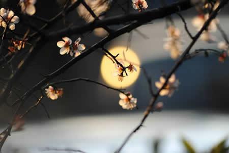 【我的网络情缘】小说:那一场风花雪月的邂逅