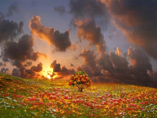 春天里拥抱太阳收藏阳光(朗诵:童话&子夜星辰)
