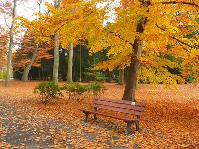 秋天的约定
