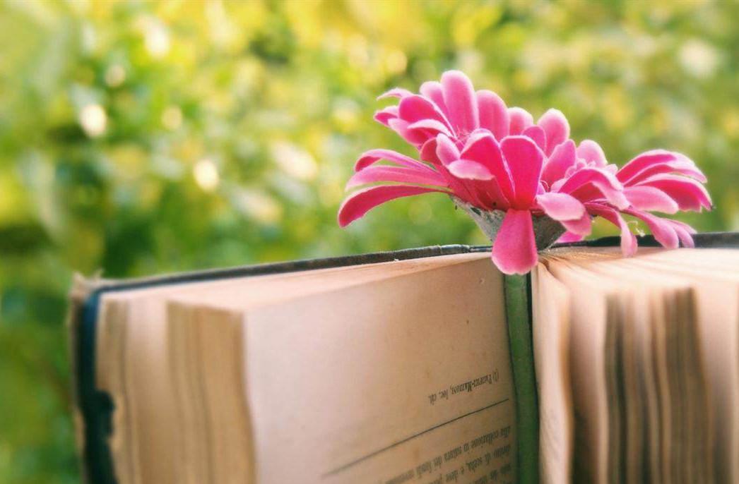 文字,是心上的花