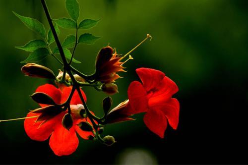 邂逅一朵花