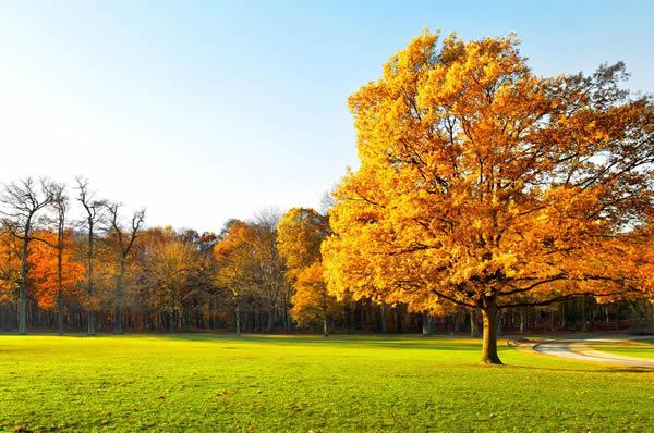 秋晕染一切生命归土