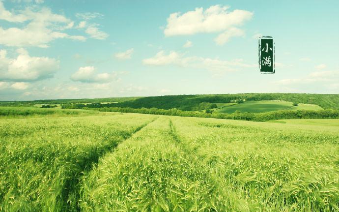 麦粒渐满是风情