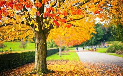 迷人的秋天