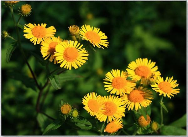 花开就是天堂