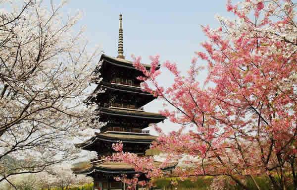 武汉的樱花