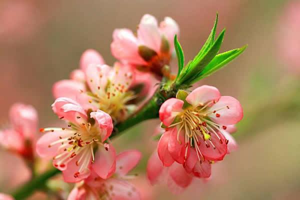 三月的温暖,三月的花
