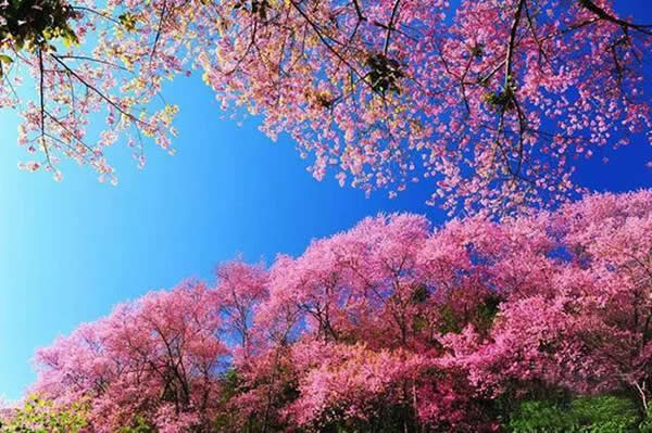 新鲜的春天