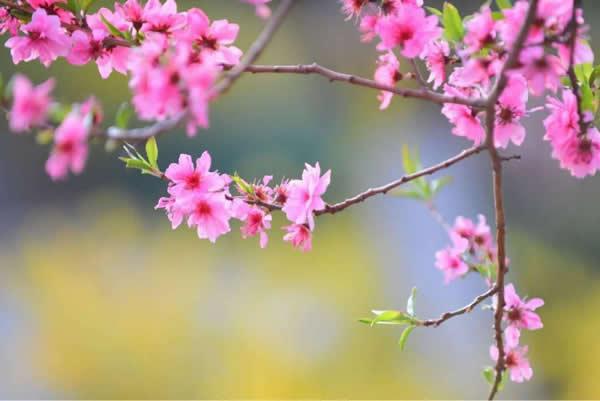 藏在心里的春天