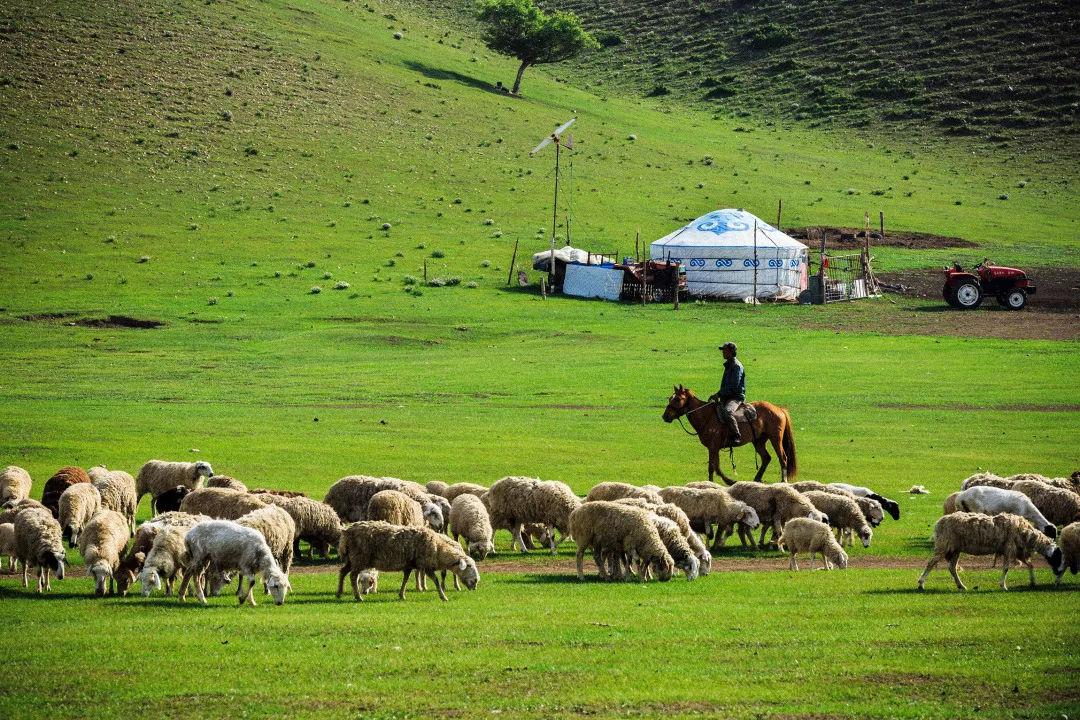 梁银:我的羊群在可可西里走丢了