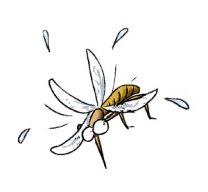 拍死一只蚊子